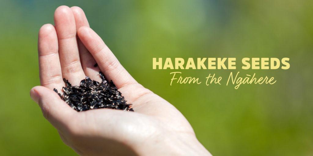 maoritv-harakeke